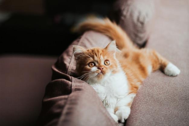 Engraçado gatinho fofo de gengibre encontra-se na parte de trás do sofá