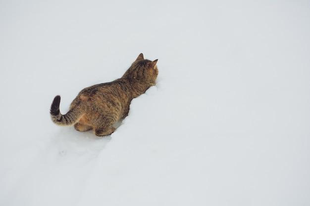 Engraçado gato tigrado cinzento com olhos amarelos, caminhando na neve profunda, ao ar livre