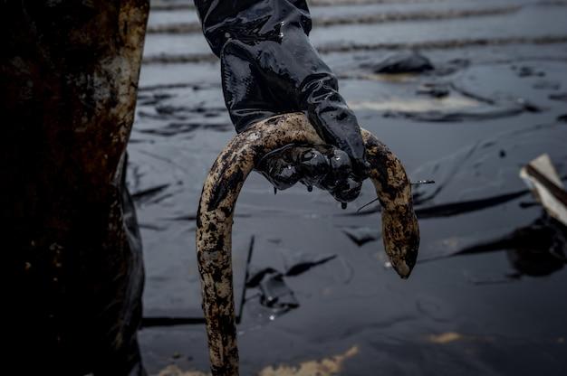Enguia morta por poluição de óleo na praia