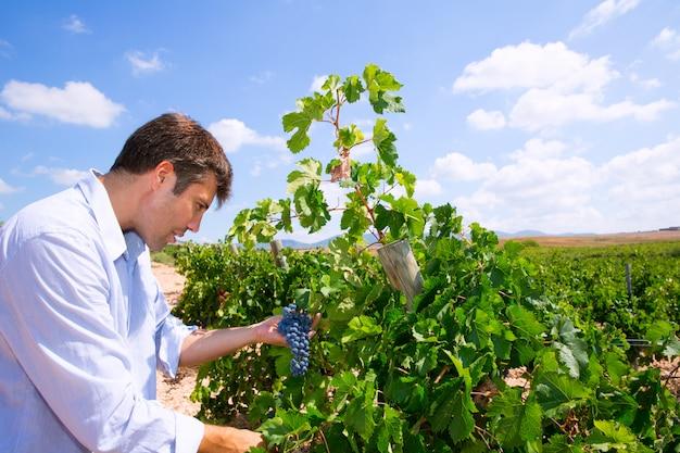 Enólogo, enólogo, verificar, tempranillo, uvas vinho