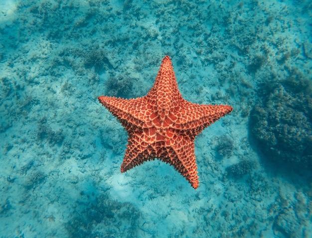 Enorme estrela do mar vermelha debaixo d'água no conceito de mar azul claro de vocação de férias e relaxamento