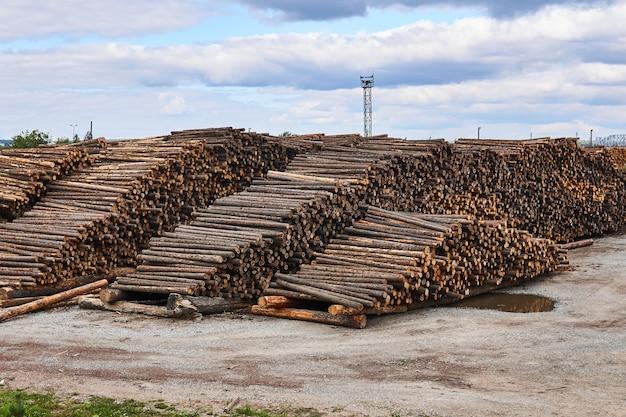 Enormes pilhas de toras de pinheiro no depósito de madeira