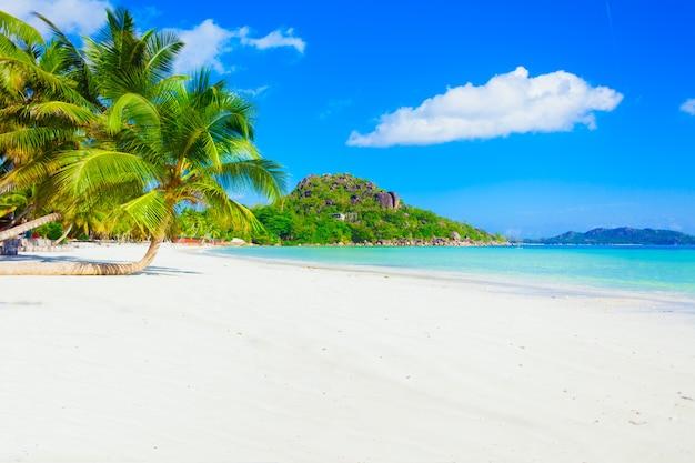 Ensolarada praia do paraíso tropical do caribe, com areia branca e palmeiras