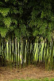 Entrada da floresta de bambu