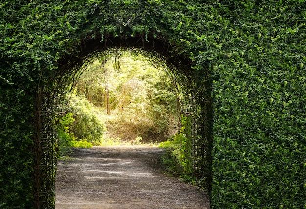 Entrada de porta de arco de árvore