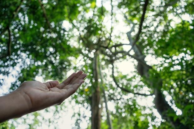 Entregue a oração para abençoar do deus no fundo do sol e da floresta, conceito de christian religion.