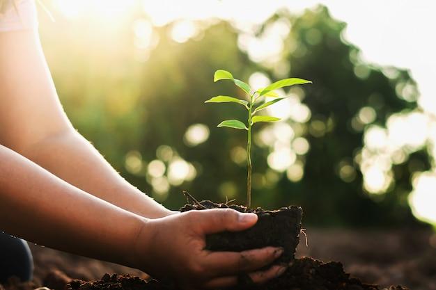 Entregue a plantação da árvore pequena e do nascer do sol no jardim. conceito mundo verde