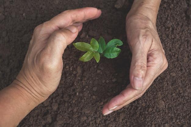 Entregue a proteção de uma planta nova verde com crescimento no solo no fundo da natureza.
