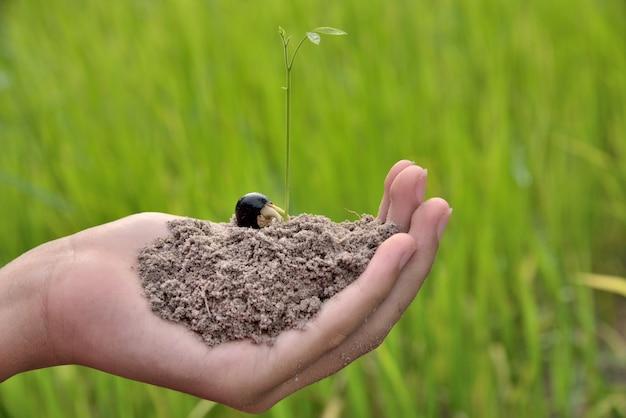 Entregue guardar a planta nova com fundo verde da natureza.