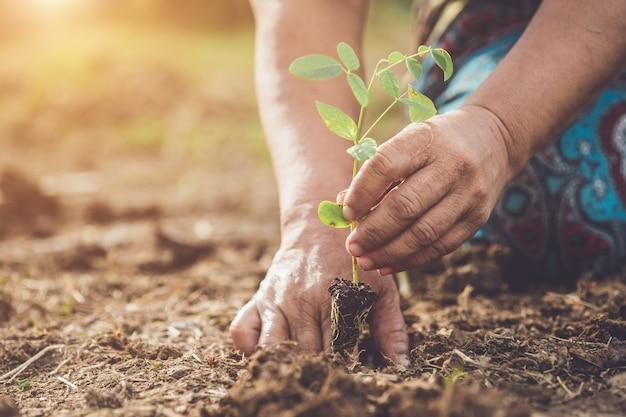 Entregue guardar e plantar a árvore de ervilha nova da borboleta no solo. salvar o mundo e o conceito de ecologia