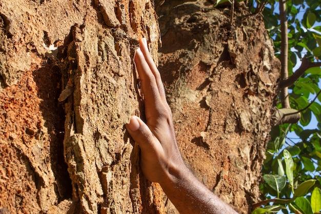 Entregue uma textura de árvore