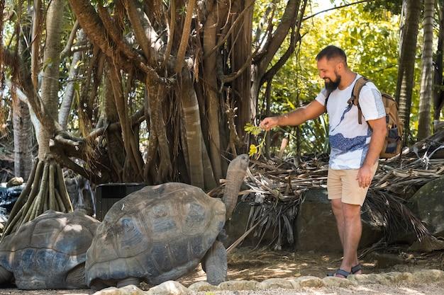 Entretenimento familiar divertido nas maurícias. turista alimentando uma tartaruga gigante no zoológico da ilha maurícia.