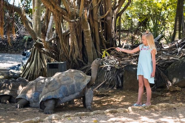 Entretenimento familiar divertido nas maurícias. uma menina alimenta uma tartaruga gigante no zoológico da ilha maurícia