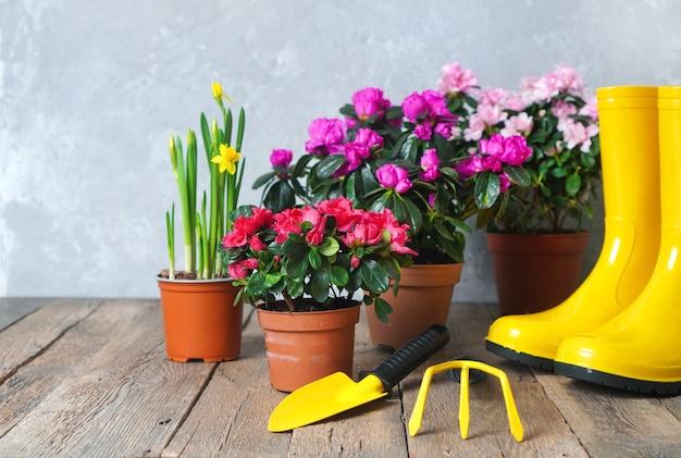 Envasamento de flores e fundo de paisagismo com flores e ferramentas de jardim