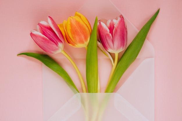 Envelope transparente fosco aberto com tulipas multicoloridas em fundo rosa