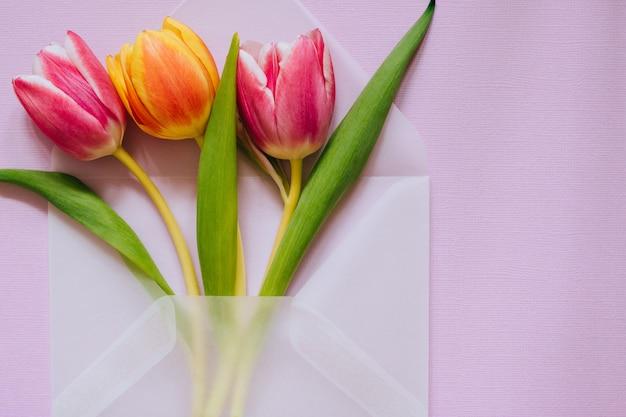 Envelope transparente fosco aberto com tulipas multicoloridas em fundo violeta