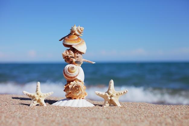 Equilíbrio ou equilíbrio de conchas em uma praia marítima e duas estrelas do mar