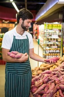 Equipe masculina organizando batata-doce na seção orgânica