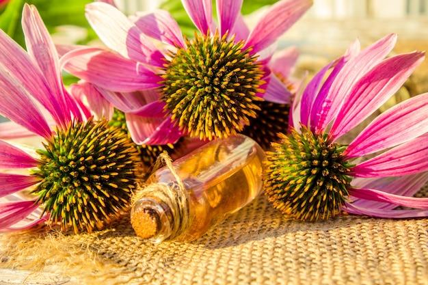 Erinacea de ervas medicinais em uma pequena garrafa