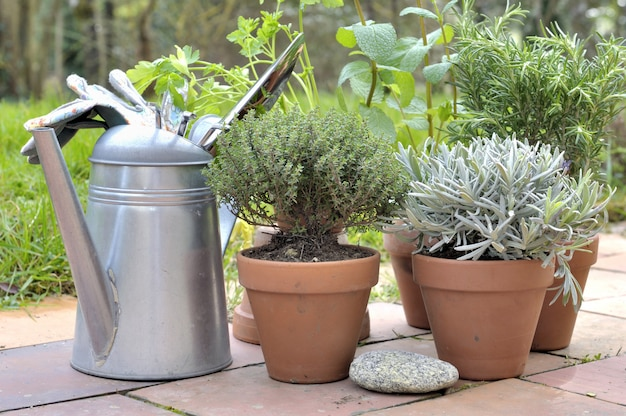 Ervas aromáticas em vaso em um pátio
