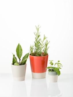 Ervas aromáticas frescas para usos culinários, medicinais ou decorativos. copyspace