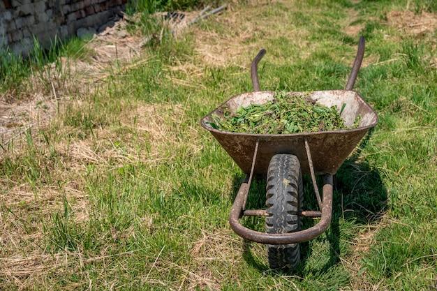 Ervas daninhas e grama em um carrinho em um campo em uma fazenda