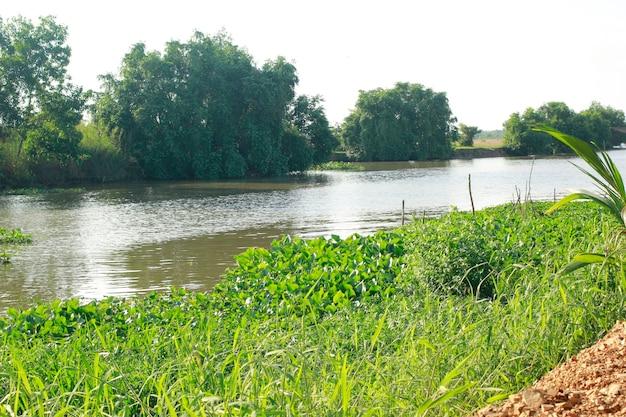 Ervas daninhas flutuando na água do canal.