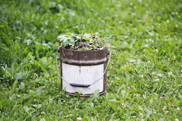 Ervas daninhas no velho balde de metal na horta.