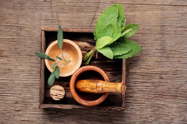 Ervas e medicina natural