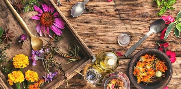 Ervas medicinais à base de plantas e plantas