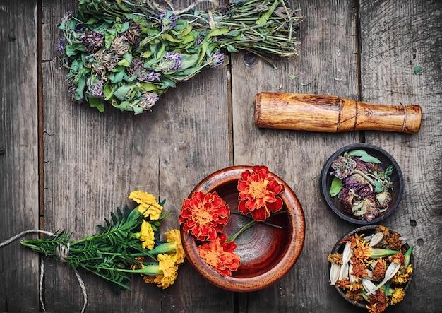 Ervas medicinais e plantas