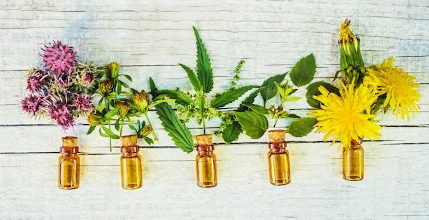 Ervas medicinais. foco seletivo. extrato de plantas da natureza.