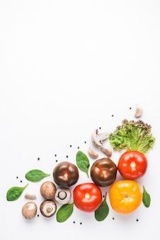 Ervas perto de cogumelos frescos e tomates
