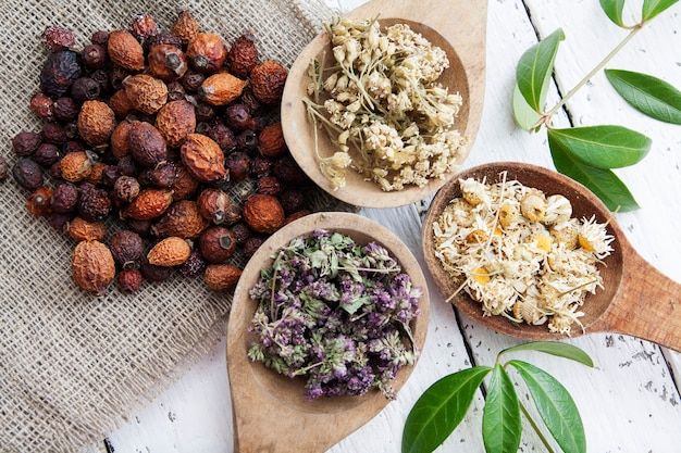 Ervas secas em colheres de madeira e roseira seca para fazer chás de ervas e infusões. medicina tradicional e conceito de tratamento à base de plantas.
