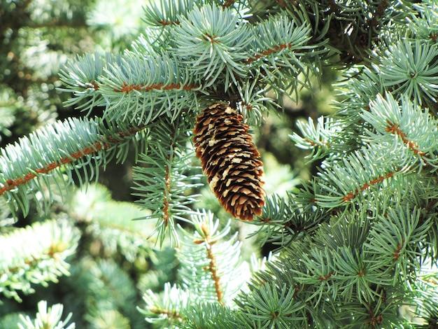 Esbarrar na árvore de natal em um dia claro e ensolarado