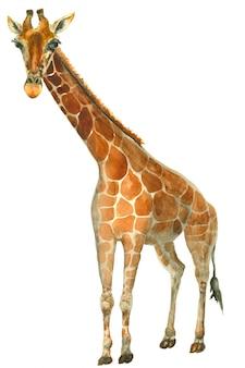 Esboço de girafa em aquarela