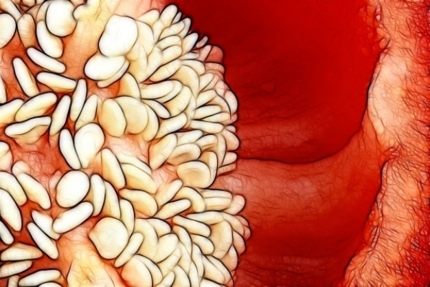 Esboço de pimenta