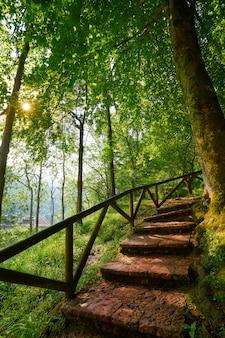 Escada da floresta de covadonga em astúrias picos europa