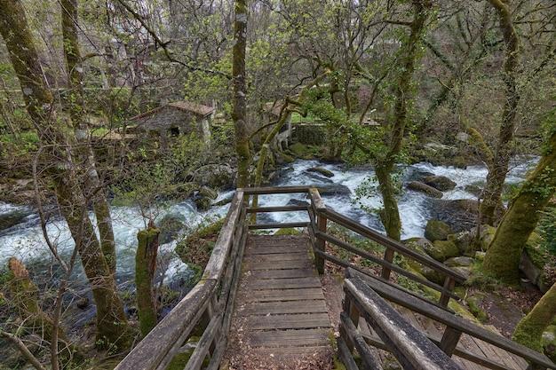 Escada de madeira em um caminho paralelo ao rio arenteiro em uma floresta na galiza, espanha.
