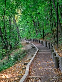 Escada na floresta verde. caminho ecológico no parque. moscou, vorobyovy gory.