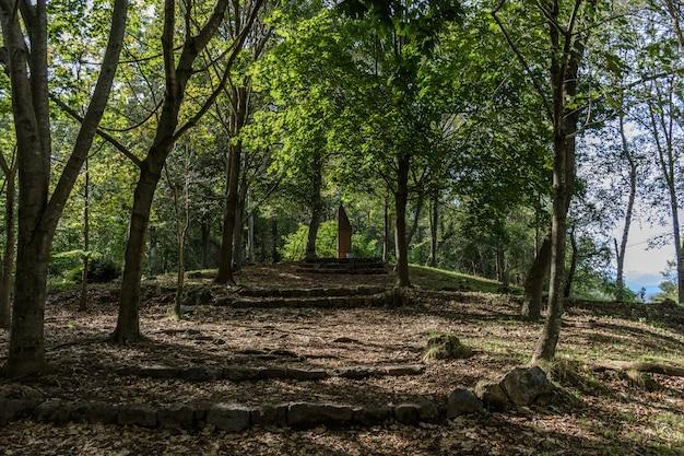 Escada para um monólito entre árvores