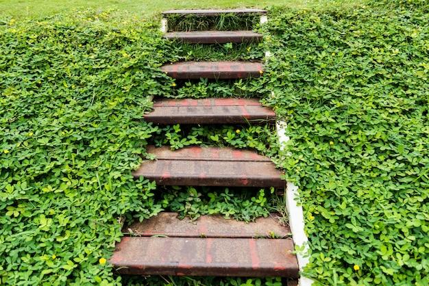 Escadas de aço antigas em fundo de folhas verdes