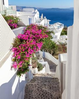 Escadas de florescência pitorescas com a buganvília de florescência cor-de-rosa que conduz ao mar, santorini, grécia.