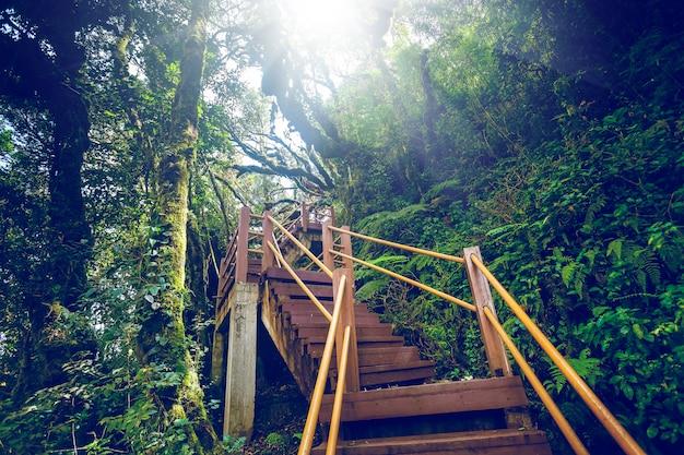 Escadas de madeira velhas.