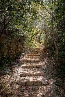 Escadas de pedra em uma floresta em mlini, croácia.