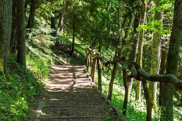 Escadas naturais de madeira complementadas por cascalho entre as árvores.