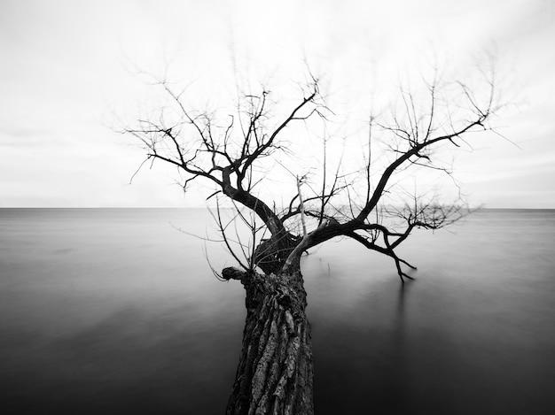 Escala de cinza de uma árvore com galhos nus no mar sob a luz do sol
