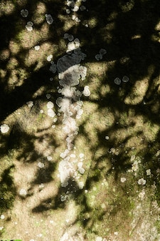 Escama de líquen na superfície de uma pedra natural com musgo à sombra dos ramos