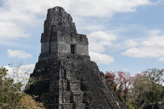 Escavação arqueológica da pirâmide do templo maia na floresta verde do parque nacional de tikal