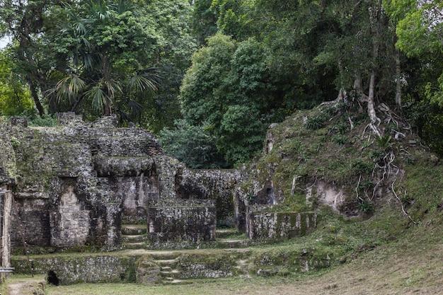 Escavação arqueológica das pirâmides do templo maia na floresta verde do parque nacional de tikal